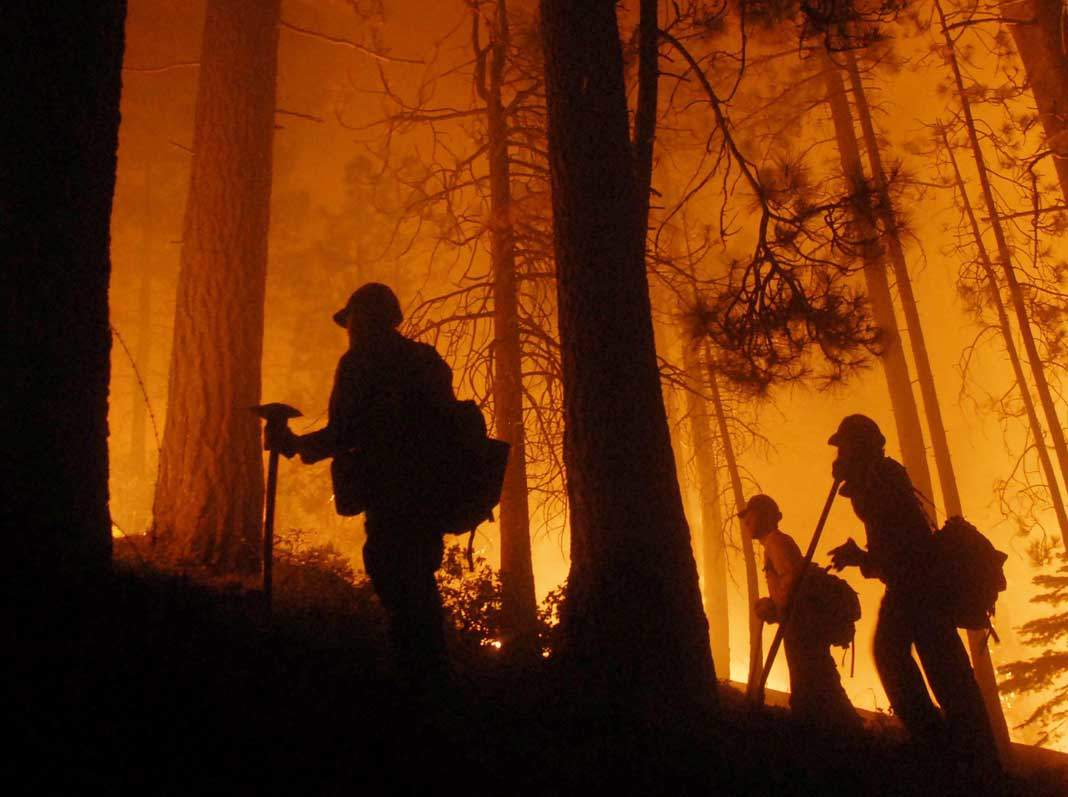 Forest Fire Fighters