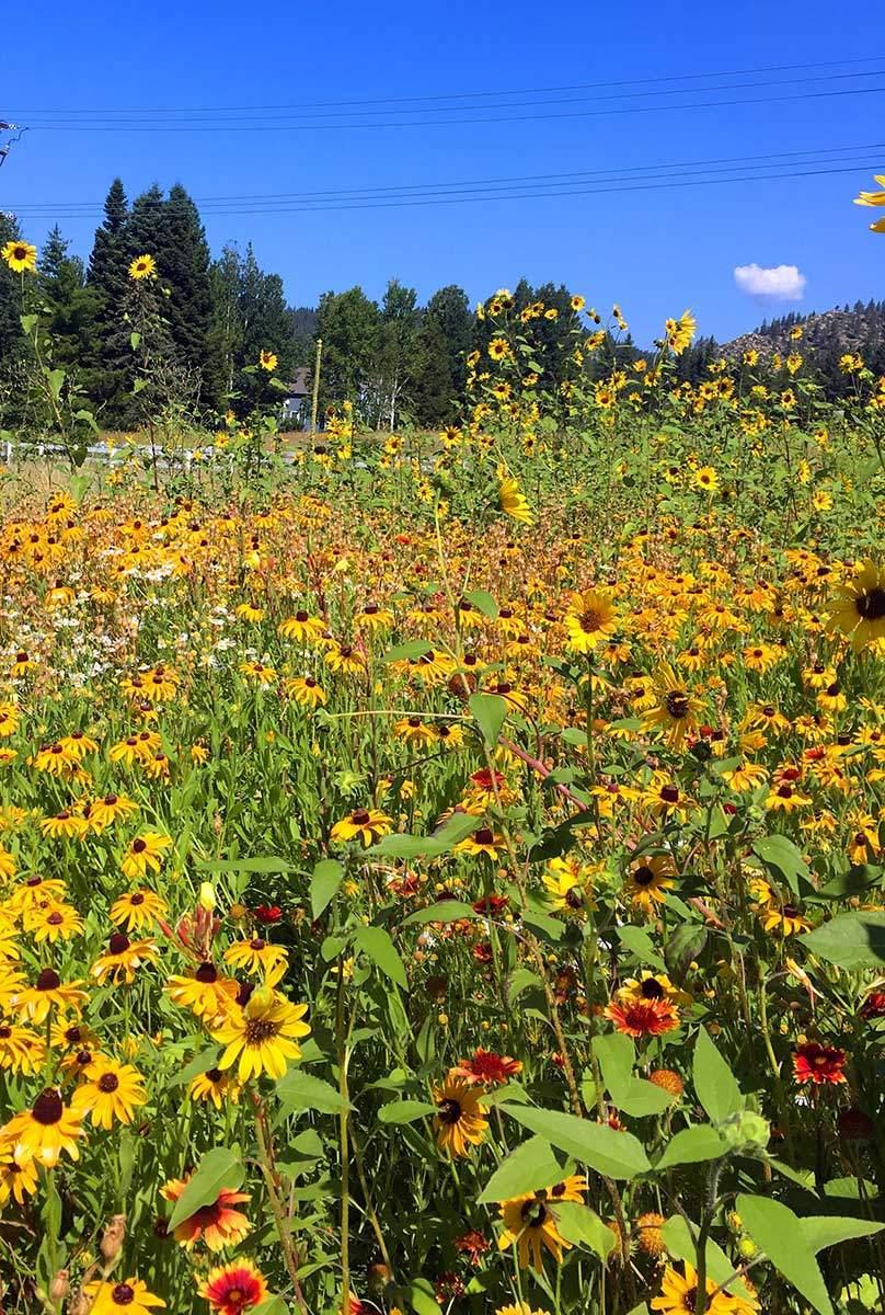 Glenbrook Flowers