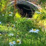 Flowers Along The Creek