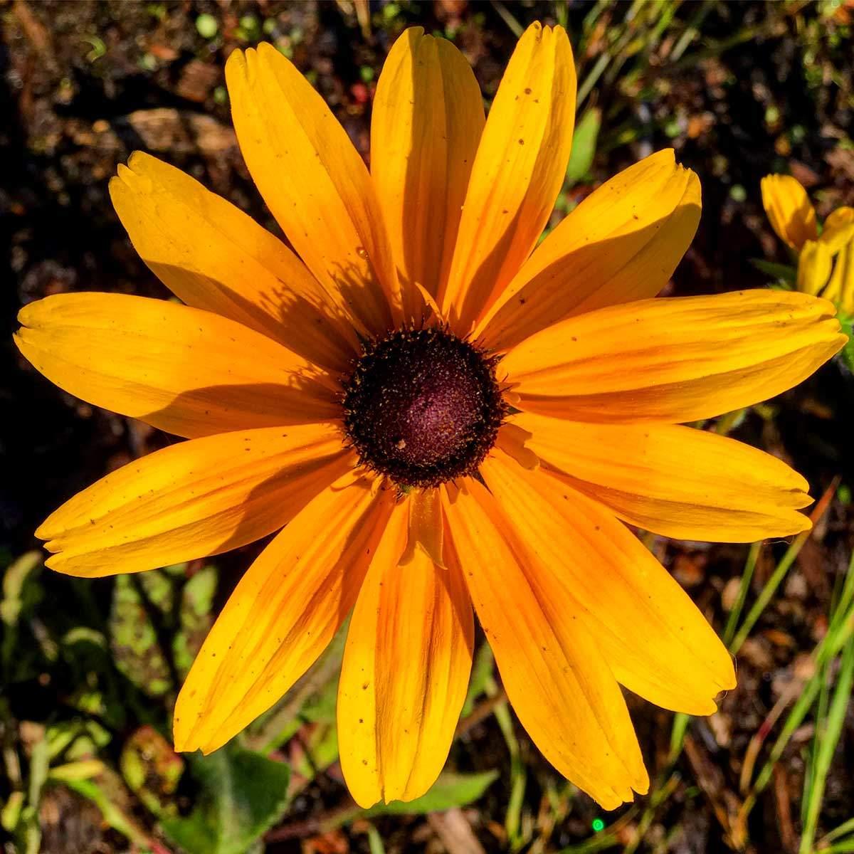 Glenbrook Nevada Flowers